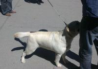 От началото на годината са регистрирани нови 1040 домашни кучета, показват данните от общинския електронен регистър. Снимка Aspekti.info (архив)