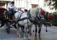Файтонът бе една от атракциите в шествието. Снимка Aspekti.info