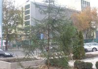 """Елхата вече е засадена и ще бъде украсена в близките дни. Снимка Район """"Източен"""""""