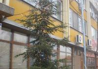 Коледното дърво пред районното кметство е обсипано с разноцветни светлини. Снимка Община Пловдив