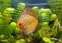152 чуждестранни и 21 местни вида риби има в аквариума. Снимка Aspekti.info