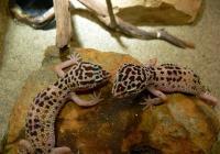 Над 100 вида животни обитават терариума. Снимка terraristic.net