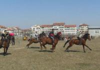 Надбягванията с коне ще се проведат в две възрастови групи. <p>Снимка БГНЕС (архив)</p>