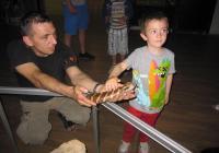 Собственикът на терариума Атанас Рангелов показа и на най-малките, че брадатата агама не е страшна.