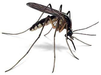 """Екипите на ОП """"Дезинфекционна станция"""" ще пръскат срещу насекомите през нощта."""