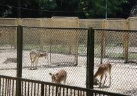 В момента животните се отглеждат в условия, които не отговарят на съвременните изисквания. Снимка © Aspekti.info (архив)