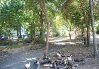 """Специалистите от отдел """"Екология"""" в администрацията в """"Източен"""" следят за почистването на потенциално опасни изсъхнали клони и дървета в района."""