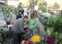 """Любителите на градинарството откриват много новости за своето хоби на изложбата """"Цветна есен"""", която е една от най-атрактивните прояви, организирани от Международен панаир Пловдив."""