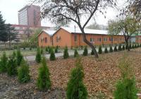 Възстановяват парка  с 550 дървета, от които 450 иглолистни - 250 туи и 200 кипариса, и 100 широколистни.