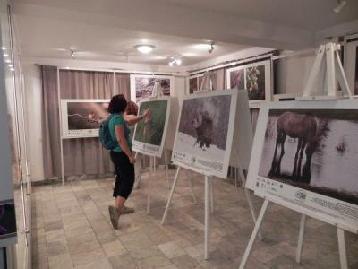 Изложбата ще остане във фоайето на местния парламент от 22 януари до 28 февруари.  Снимка Община Пловдив
