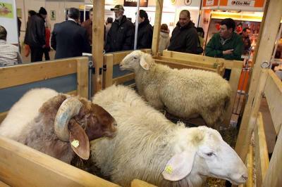"""Елитни породи животни, технологии и оборудване за тяхното отглеждане ще бъдат показани на Международната селскостопанска изложба """"Агра"""" от 4 до 8 март 2014 г. в Международен панаир Пловдив."""