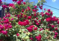 Пловдив ще потъне в цветя напролет. Снимка Aspekti.info (архив)