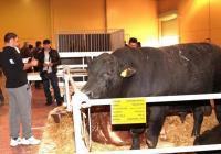 """Посетителите на тазгодишната """"Агра"""" ще видят елитни бикове, а също и екземпляри от най-популярните породи говеда, овце и  кози.  Снимка: ©Международен панаир - Пловдив (архив)"""