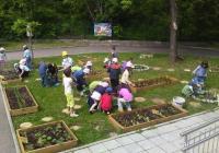 Най-малките софиянци отгледаха вкусни зеленчуци в направените от самите тях градинки.
